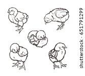 little chicken. poultry.... | Shutterstock .eps vector #651791299