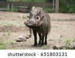 warthog side view | Shutterstock . vector #651803131