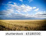 Wheat fields in rural Australia after harvest. - stock photo
