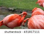pink american flamingos | Shutterstock . vector #651817111
