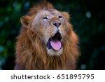 Small photo of Lion Roar