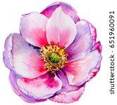 wildflower tea rose flower in a ...   Shutterstock . vector #651960091