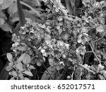 spring flowers on trees in... | Shutterstock . vector #652017571