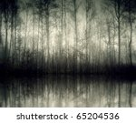 An Image Of A Beautiful Forest...