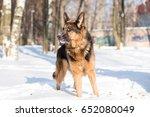 dog german shepherd in a park... | Shutterstock . vector #652080049