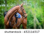 Stock photo brown horse with saddle and bridle looking back 652116517