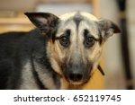 Cute Dog  Dog  Scared ...