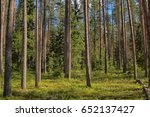 pine trees in the forest | Shutterstock . vector #652137427