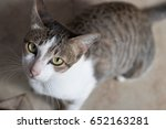 Stock photo cat 652163281