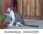 Stock photo cat 652163305