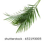 the palm leaf isolated white | Shutterstock . vector #652193005
