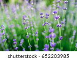 blooming lavender in france.... | Shutterstock . vector #652203985