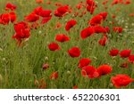 flowers red poppies blossom on...   Shutterstock . vector #652206301