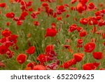 flowers red poppies blossom on... | Shutterstock . vector #652209625