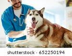 Stock photo cute siberian husky dog having examination in vet clinics 652250194