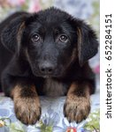 scared pooch puppy lying on the ... | Shutterstock . vector #652284151