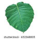 bo leaf on isolate and white... | Shutterstock . vector #652368835