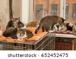 Many Cats Together Indoors...