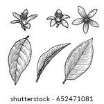 citrus leaf and flower...   Shutterstock .eps vector #652471081