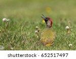 european green woodpecker... | Shutterstock . vector #652517497