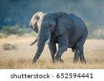 a bull elephant in the savuti...   Shutterstock . vector #652594441
