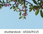 branches of leela wadi.... | Shutterstock . vector #652629115