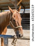 horse in a riding stable | Shutterstock . vector #652652119