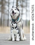 Stock photo portrait of the female husky with puppy at autumn time 652676251