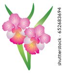 singapore national flower vanda ... | Shutterstock .eps vector #652683694