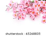 Pink Plum Blossom Isolated On...