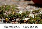 ladakh flower | Shutterstock . vector #652715515