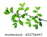 spring twig of hazel with young ... | Shutterstock .eps vector #652756447