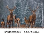 twins. winter wildlife... | Shutterstock . vector #652758361