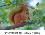 This Is A Brown Squirrel She...