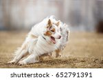 dog running and playing in the... | Shutterstock . vector #652791391