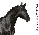 Black Horse Head Isolated On A...