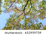 upper branches of trees... | Shutterstock . vector #652959739