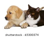 Stock photo cat and pup on a white background 65300374