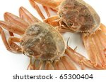 Female Snow Crab