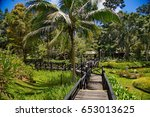 the jungle of borneo  beautiful ... | Shutterstock . vector #653013625