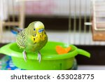 Budgerigar On The Bird Cage....
