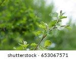 nature in summer. greenery....   Shutterstock . vector #653067571