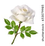 white rose isolated on white... | Shutterstock . vector #653079985