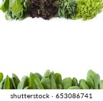 Fresh Lettuce At Border Of...