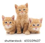 Stock photo three red cats isolated on a white background 653109637