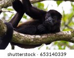 Close Up Of A Howler Monkey On...