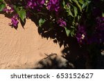 small lizard sitting under the... | Shutterstock . vector #653152627