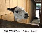 happy alpaca | Shutterstock . vector #653226961
