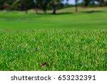 grass texture  leaf background... | Shutterstock . vector #653232391