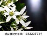 white flowers on dark background   Shutterstock . vector #653239369